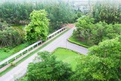 Asfaltväg i skog Royaltyfri Foto
