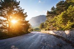 Asfaltväg i sommarskog på solnedgången 2008 crimean berg sörjer sommar Arkivfoto