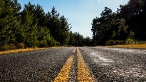 Asfaltväg med gul teckning som passerar i skogen Royaltyfri Bild