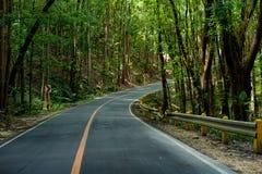 Asfaltväg på mangroveskogen Royaltyfria Bilder