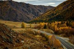 Asfaltväg till bergen av Altai som passerar till och med höstlandskapet arkivfoto