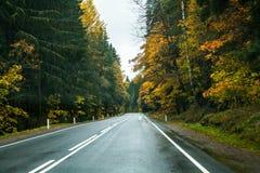 Asfaltväg till och med höstskogen arkivbilder