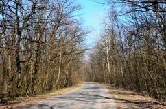 Asfaltväg till och med vårskogen arkivbilder