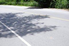 Asfaltweg en schaduw van bomen Stock Afbeeldingen