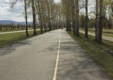 Asfaltweg tussen bomen stock afbeeldingen