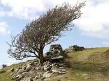 ash гора Стоковая Фотография RF