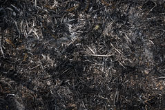 Ash background. The ash from the fire burned on the ground, Nature backgrouned Royalty Free Stock Photos