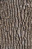 Ash Bark verde Fotos de Stock