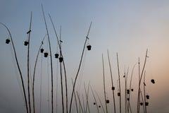 Ash Baskets Over il Gange su crepuscolo Immagini Stock