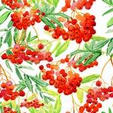 Ash-berry Watercolor rowan. Watercolor seamless background with ash-berry Watercolor rowan royalty free illustration