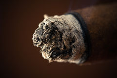 Ash big cigar Stock Photography
