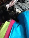 Ash black. Black kitty pink Stock Photo