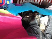 Ash black. Black kitty pink Royalty Free Stock Photos