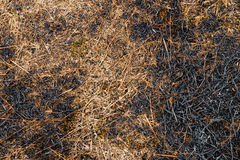Ash burned dry grass land ground texture background carbon CO2 Stock Photography