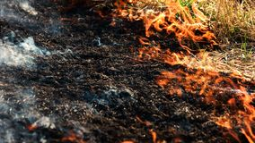 Ash of burnt grass in the fire.