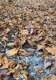 The ash after camping with dried leaves Royalty Free Stock Photo