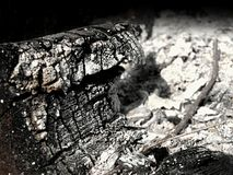 Ash. Charred wooden log surrounded by ashes stock images