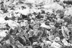 Ash. Coals of wood and coal consumed stock photography