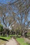 Ash grove next to the river Manzanares stock photo