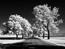Ash lane in infrared Stock Photo