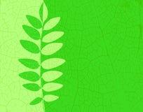 Ash leaf Royalty Free Stock Image