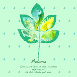 Ash leaf with watercolor pattern for autumn design. Royalty Free Stock Images