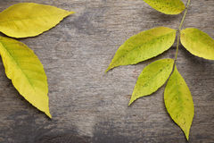 Free Ash Leaves On Old Wood Table Royalty Free Stock Photography - 42605847