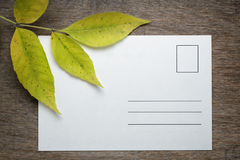 Ash leaves with postcard Royalty Free Stock Photography