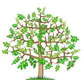 Ash lonely  tree. Mountain ash abstract lonely  big tree illustration Stock Image