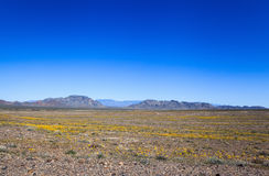 Ash Meadows National Wildlife Refuge, California. USA Stock Images