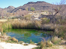 Spring within the Ash Meadow National Wildlife Refuge, Nevada. Ash Meadows is an unusual wetland region in southwestern Nevada, near Death Valley National Park stock image