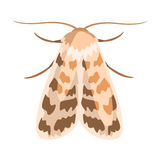 Ash sphinx moth or manduca jasminearum. Colorful cartoon illustration. Isolated on a white background Royalty Free Stock Photos