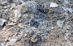 Ash texture closeup Stock Image