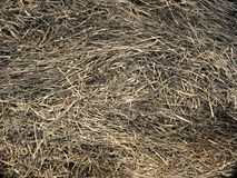 Ash texture. From rice is burning in farm Stock Photography