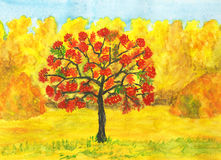 Ash tree in autumn. Hand painted picture, watercolours - autumn landscape: ash tree with red berries and yellow forest Royalty Free Stock Image