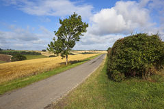 Ash tree and country road Royalty Free Stock Images