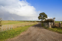 Ash tree and farm gate Stock Photography