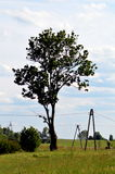 Ash tree in a field Royalty Free Stock Photography