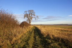 Ash tree and footpath Royalty Free Stock Photos