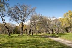 Ash tree grove stock image