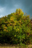 Ash tree and stormy sky Royalty Free Stock Photos
