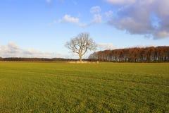 Ash tree and wheat Royalty Free Stock Photos