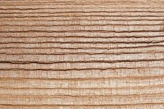 Ash tree wood texture Stock Image
