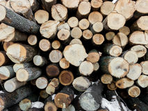 Ash Tree Woodpile 1 Royaltyfria Foton