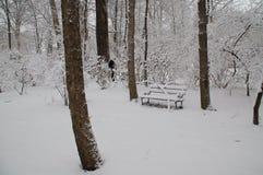 Ash Trees u. schneebedeckte Bank stockbild