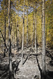 Ash in the wood vertical with sky Royalty Free Stock Images