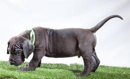 Ashamed puppy Stock Image