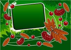 ashberry πράσινο κόκκινο εμβλημάτ Στοκ Φωτογραφίες