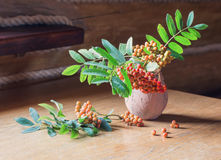 Ashberry на деревянной предпосылке Стоковые Изображения