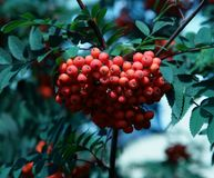 The Ashberry Stock Photography